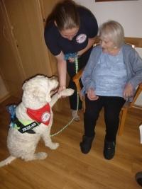 Therapiehund Sammy besucht unsere Bewohner
